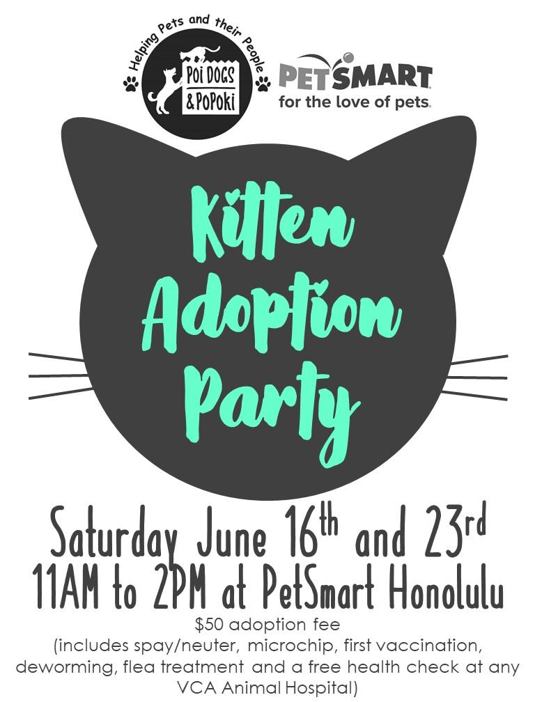Kitten Adoption Flyer (blue)